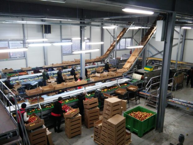 Apple packing line
